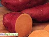 Oranžové batáty, Sladké brambory - odrůda Beaugeard (Ipomea batata ´Beaugeard´) - NOVINKA 2017