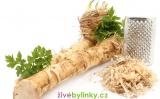 Křen selský (Armoracia rusticana) - velká sazenice