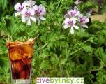 Muškát s vůní Coly (Pelargonium odoratissimum ´Odorata Cola´) - NOVINKA 2017