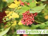 Sečuánský pepř (Zanthoxylum piperitum)