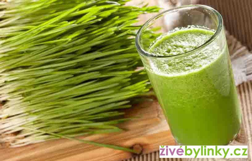 Smoothie grass - zelený ječmen (Hordeum vulgare))