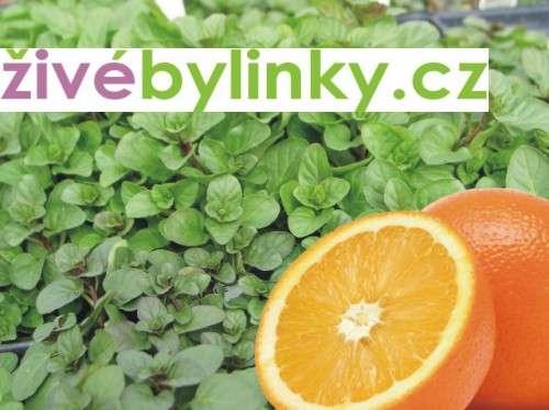 Pomerančová máta (Mentha x piperita ´Granada´)