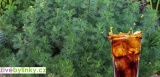 Cola bylinka (Artemisia abrotanum var. maritima ´Cola´)