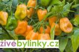 Habanero paprička (Capsicum chinense Jacquin)