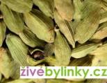 Kardamon, amon skořicový (Elettaria cardamomum) - NOVINKA JARO 2021