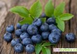 Lesní borůvka (Vaccinium myrtillus) - NOVINKA JARO 2021